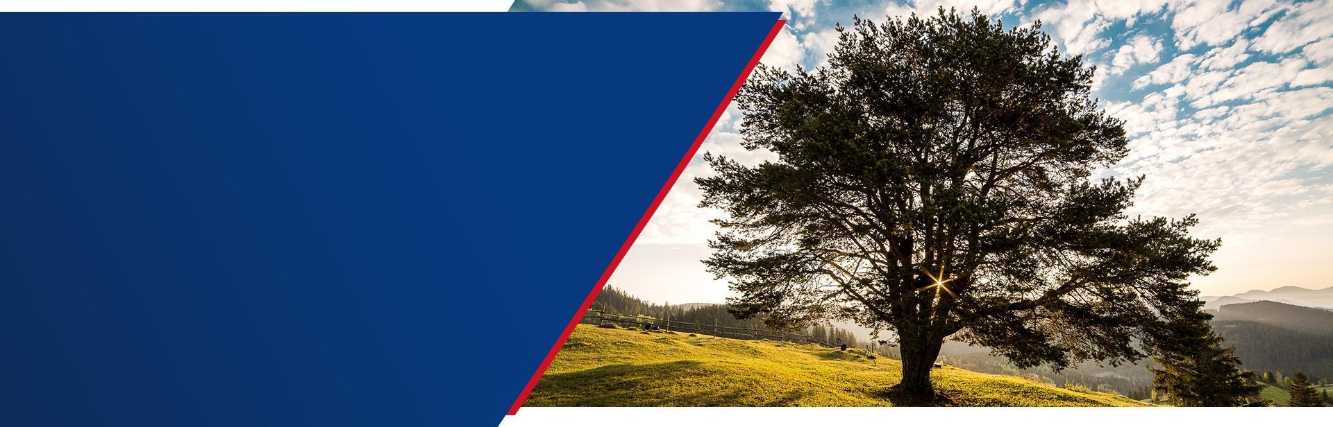Certyfikat zrównoważonej gospodarki leśnej FSC™